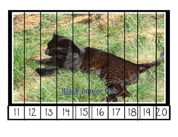 Zoo Animal Picture Puzzles