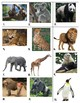 Zoo Animal Picture and Name Memory