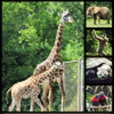 Zoo Animal Pictures for Products or Instruction