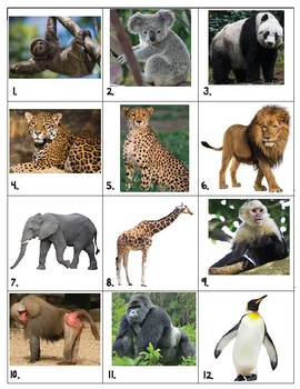 Zoo Animal Pictures with Names Memory