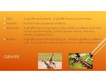 Zoo Animal PowerPoint: including pictures,diet, habitat, attributes, and babies.