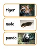Zoo Animal Vocabulary / Word Wall Cards
