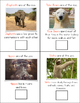 Zoo Animals Adapted Book