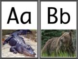 Zoo Animals Alphabet Phonics Chart - Real Photos