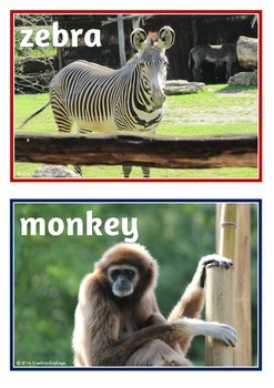 Zoo Animals Photo Set