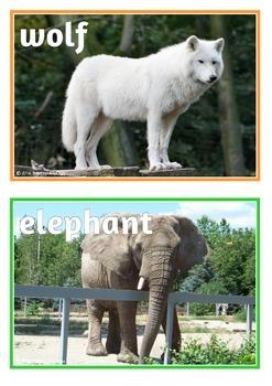 Zoo Animals Photo Set