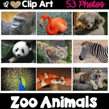 Zoo Animals Photos