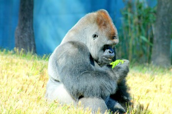 Zoo Animals - Stock Photos - Photo Pack Bundle - Tiger, Bear, Zebra, Lion & More