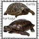 Zoo Animals/Animales Zoologicos/Flashcards