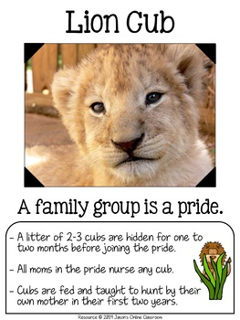 Zoo Babies Posters {20 Posters with Facts} Formatted for Bulletin Board Ideas