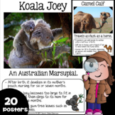 Zoo Babies Posters {20 Posters with Facts} Formatted for B