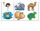 Zoo & Ocean Animal Flashcards