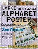 Zoo Phonics Large Poster - REAL ANIMAL PICTURES