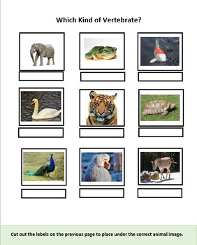 Zoo Rhymes & Vertebrates - Narrated PowerPoint + Activity Sheets