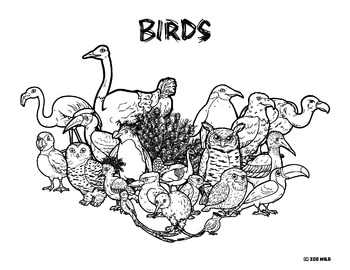 Zoo Wild Group Collage Coloring Pages -- Homeschool or Elementary Fun
