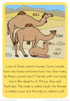 Zoo animal families  book