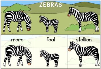 Zoo animal families bundle