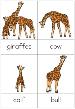 Zoo animal families nomenclature cards