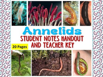 Zoology – Annelid Student Notes Handout and Teacher Key