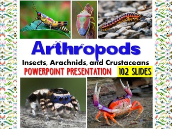 Zoology – Arthropod PowerPoint Presentation (insects, spid