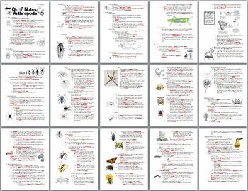 Zoology Arthropod Student Notes Handout & Key (insects, arachnids, crustaceans)