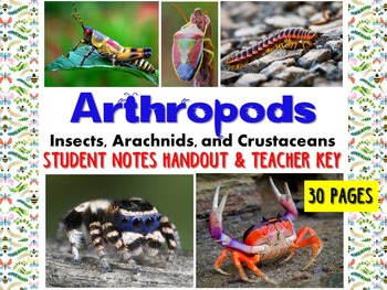Zoology Arthropod Student Notes Handout & Key (insects, ar