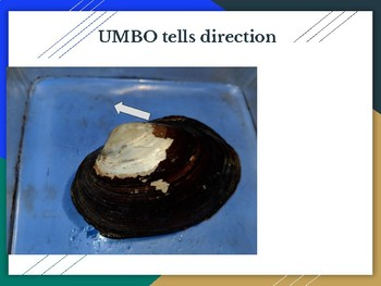 Zoology Clam Dissection Presentation