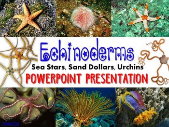 Zoology Echinoderm PowerPoint Presentation (sea stars, san