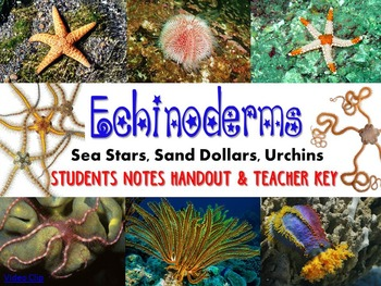 Zoology – Echinoderm  Student Notes Handout and Teacher Key