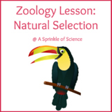Zoology Lesson - Natural Selection