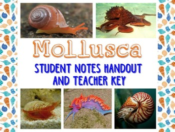Zoology – Mollusk Student Notes Handout and Teacher Key