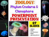 Zoology: Phylum Cnidaria and Ctenophora PowerPoint Presentation