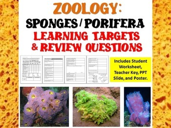 Zoology Phylum Porifera: Sponges Learning Targets and Review Questions