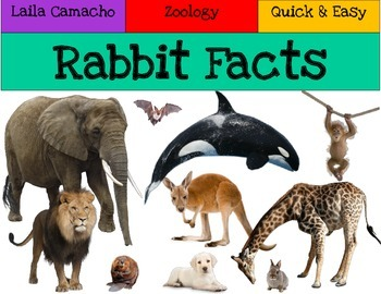 Rabbit Facts