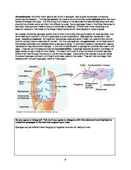 Zoology Textbook - Invertebrates