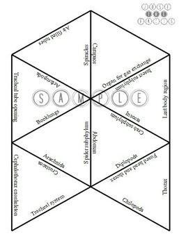 Zoology Vocab Puzzle: Arthropoda