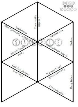 Zoology Vocab Puzzle: Chordata