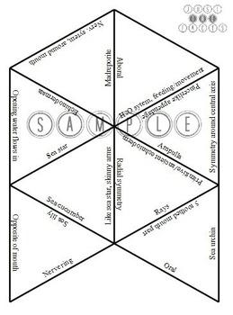 Zoology Vocab Puzzle: Echinodermata