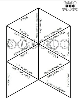 Zoology Vocab Puzzle: Porifera