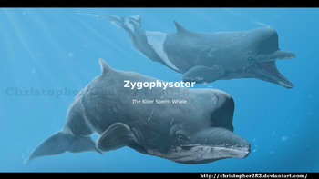 Zygophyseter