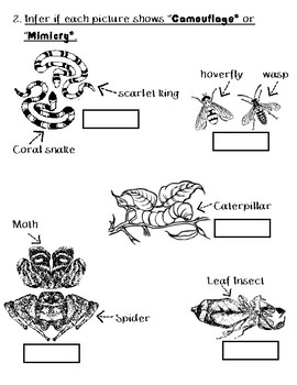 adaptations, camouflage and mimicry