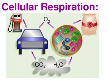 all about cellular respiration