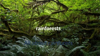 all about rainforest