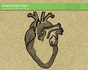 anatomical heart SVG cut files, DXF, vector EPS cutting file instant download
