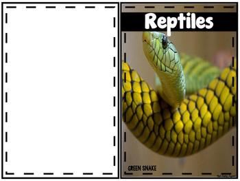 animal classifications freebies