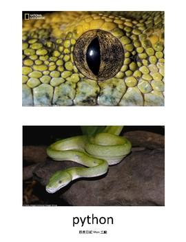 animal eye matching