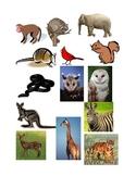 animals in your neighborhood (Sorting)