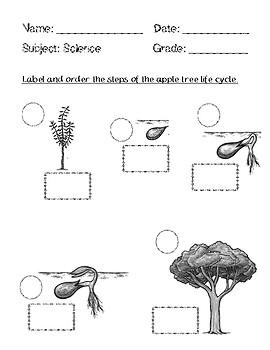 apple seed life cycle