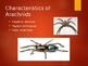 arachnida arthropoda powerpoint