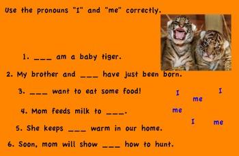 Promethean Board-aw, au flipchart. A Tiger Cub Grows Up Treasures  First Grade
